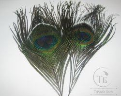 Peacock eyes md. 2шт