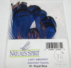 lady Amherst tippet feathers (12 fs) royal blue